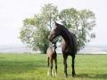 2006-mare-foal