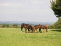 2054-group-mares-foals