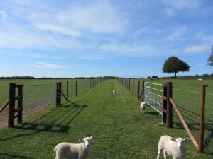 Small paddocks for daily turnout