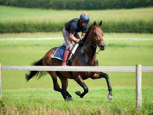 1536-gallops-1